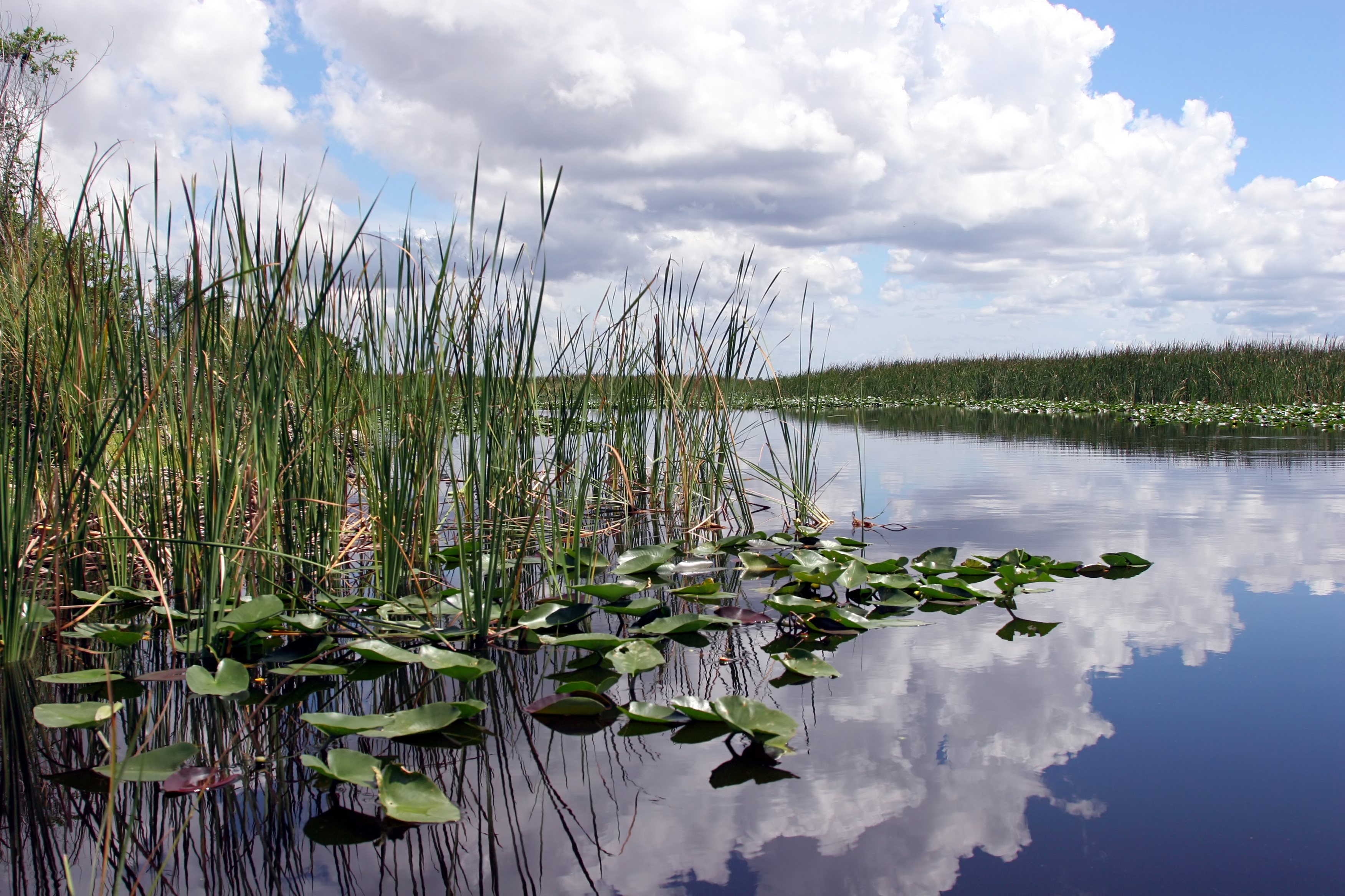 Everglades National Park Airboat Tours 39