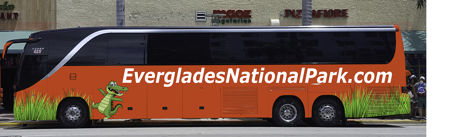 everglades-national-park-shuttle-bus-service-from-miami.jpg
