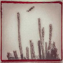 Alejandro Escovedo - La Cruzada (WHITE VINYL LP)