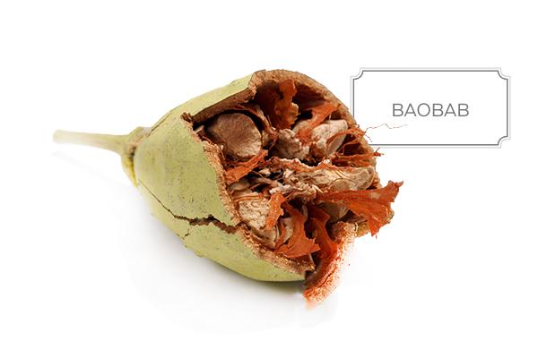 baobab-a.jpg