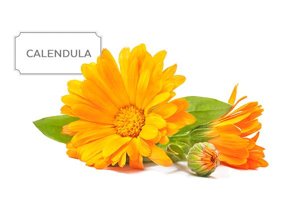 calendula1.jpg