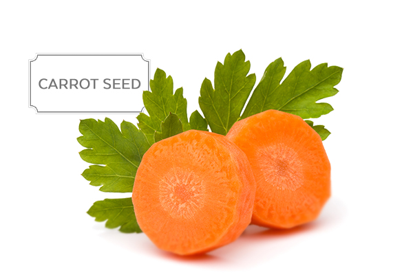 carrot-seed.jpg
