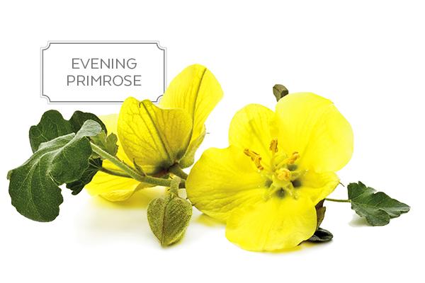 evening-primrose-a.jpg