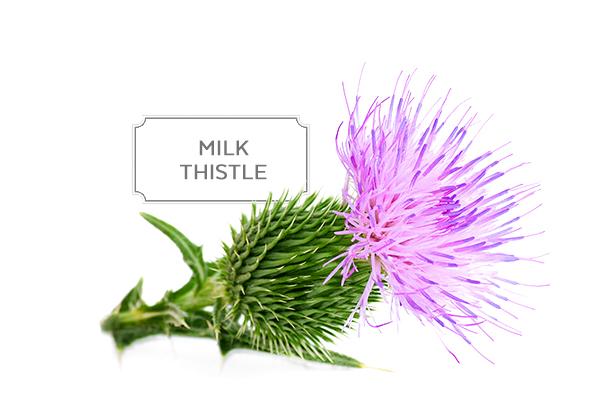 milk-thistle1.jpg