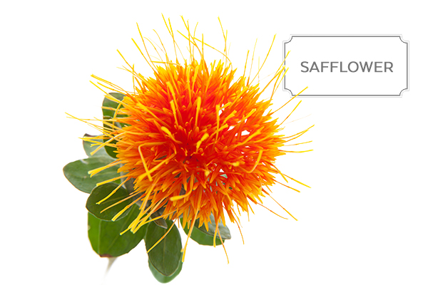 safflower1.jpg
