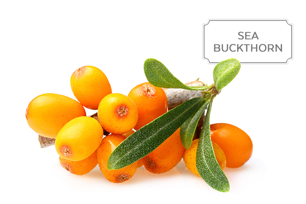 sea-buckthorn1.jpg