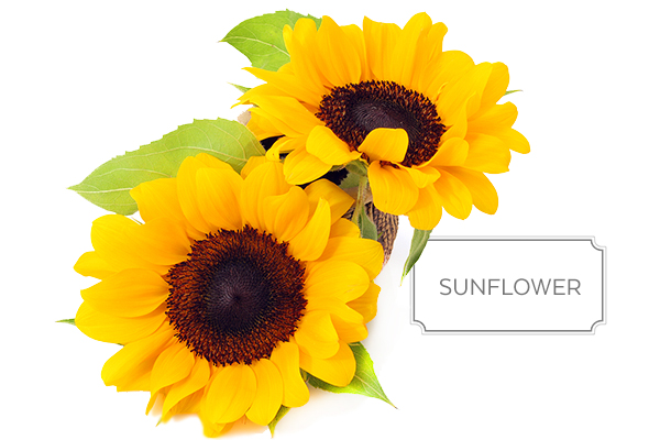 sunflower-a.jpg