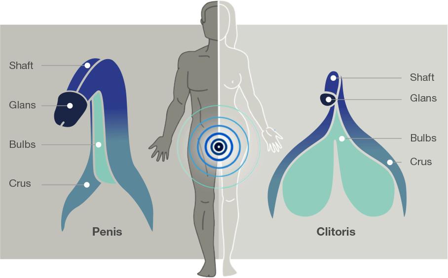 Arcwave Ion Penis Masturbator - Penis / Clitoris Comparison