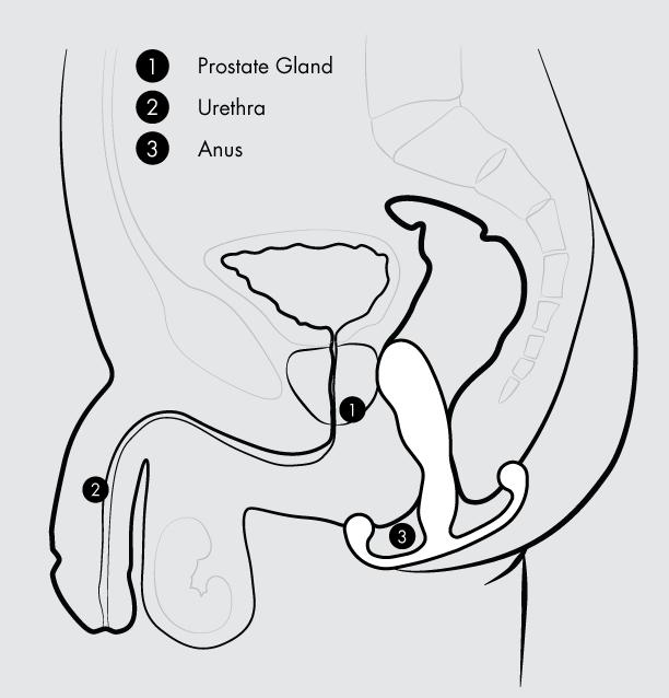 Aneros Prostate Stimulator - Internal View