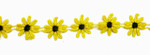"Venise Lace 7/8"" (22mm) Yellow & Black Daisy 10 Yards"