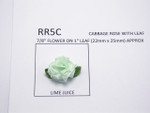Cabbage Rose with Leaf 24 Pack CRYSTALINE
