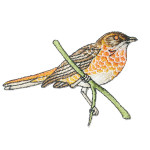 Iron On Patch Applique - Bird on Branch 9748