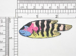 "Tropical Fish Black Striped Iron On Patch Applique  Fully Embroidered   Measures 3/4"" high x 2 1/2"" wide approximately"