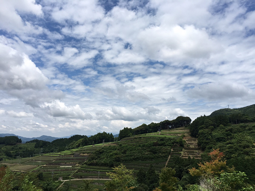 Views of Ureshino, tea producing areas