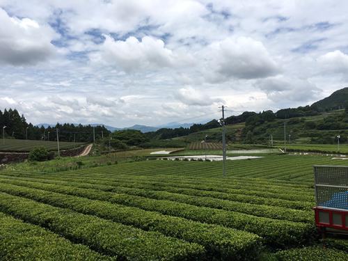 Views of Ureshino, tea producing areas2