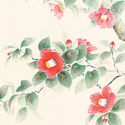 Camellia / Tsubaki - with wood box