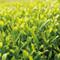 [JAS Certified Organic] Mountain-grown Fukamushi Yabukita Sencha green tea 1kg (2.21lbs) bulk wholesale - image1