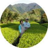 Shirakawa Tea Farm