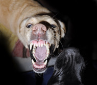 Rabid Dogs - Haunted House Halloween Sound Effects - MP3 Download