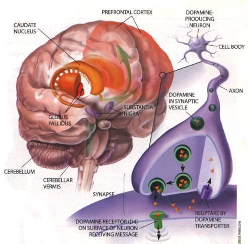 valentines-5-dopamine-brain.jpg