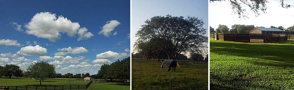 Sunshine Lane Ranch, Sunshine Lane Hay, South Florida Hay Distribution