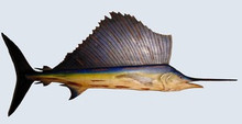 Fishtales Large Wooden Sailfish