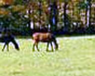 Dryland Horse Pasture