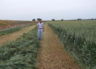 PR1404 Wheat