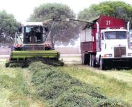 Organic WB Patron Wheat