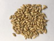UC933 Barley
