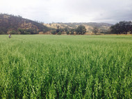 Kanota Oats Organic
