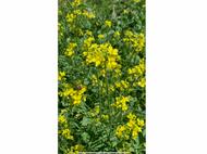 BeeMax Pollinator Mix