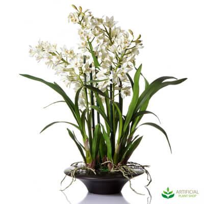 Cymbidium orchid 70cm