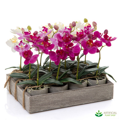 12 Mixed Potted Orchids