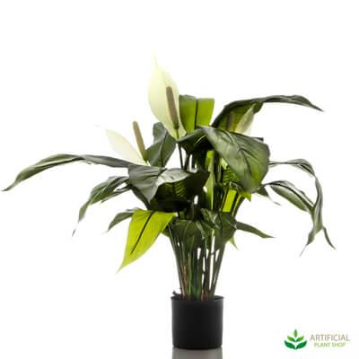 Spathiphyllum Lily 63cm