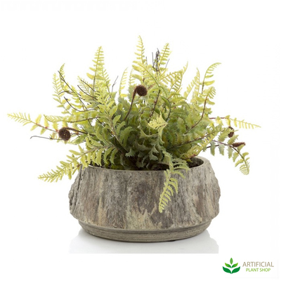 Fern in Ceramic Pot