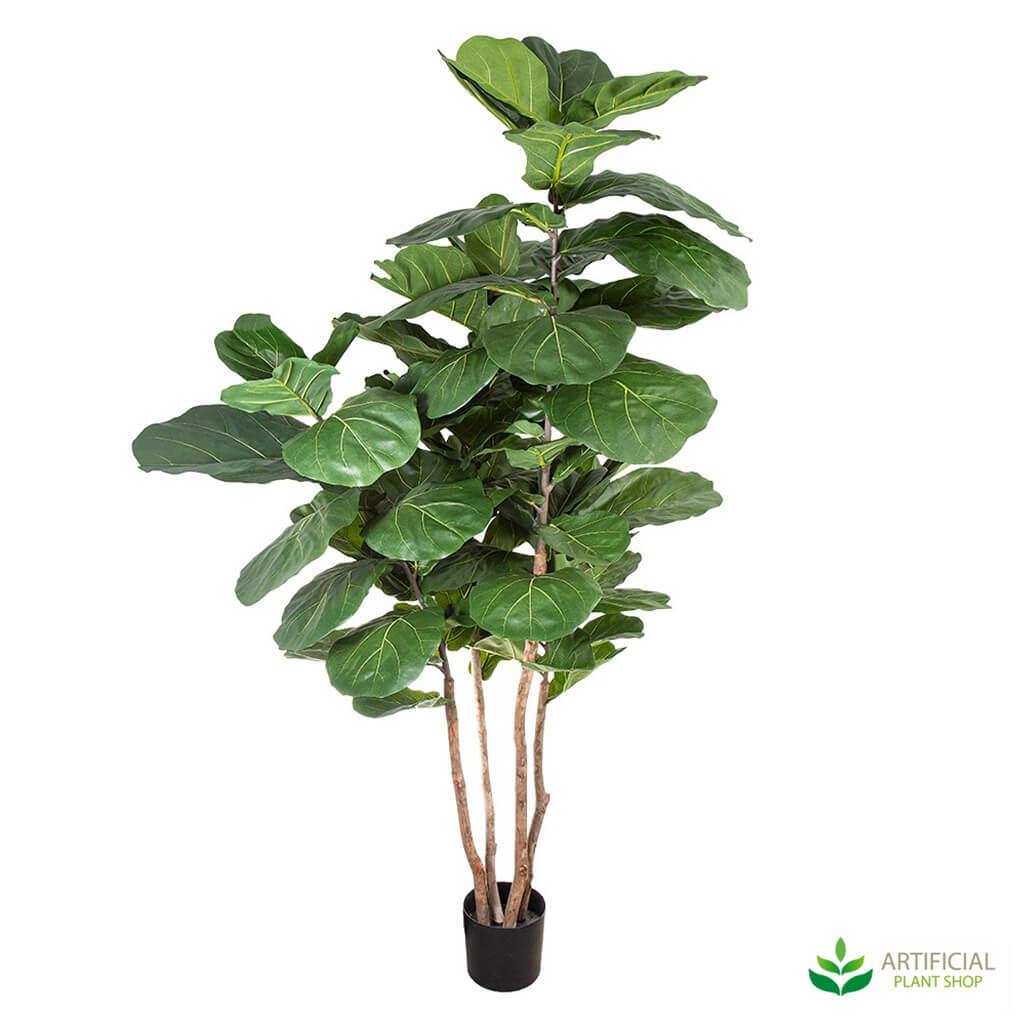 Fiddle Leaf Fig Tree 1.9m