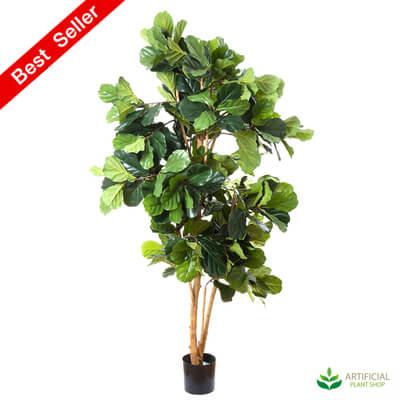 Fiddle Leaf Tree 2m
