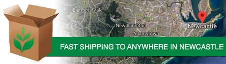 newcastle-shipping.jpg
