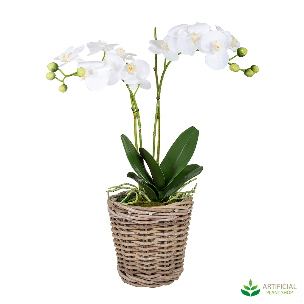 White orchid in woven basket
