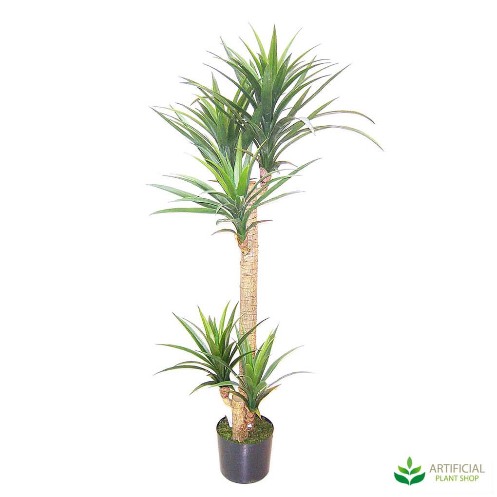 Yucca Tree 1.5m