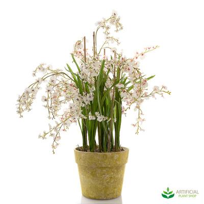 Dancing Orchid 105cm