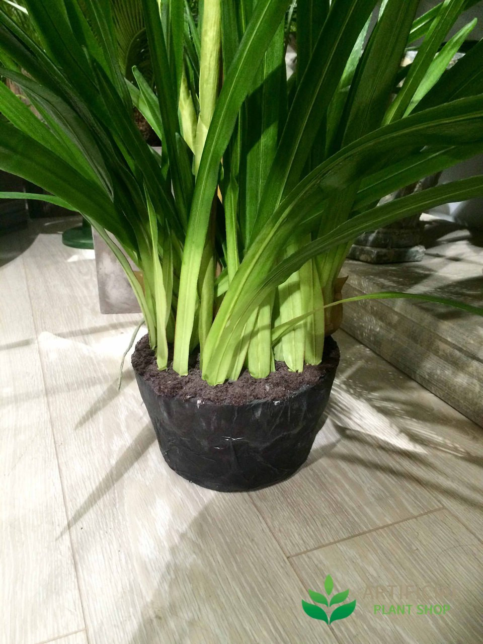 Burgundy Orchid Stems and pot