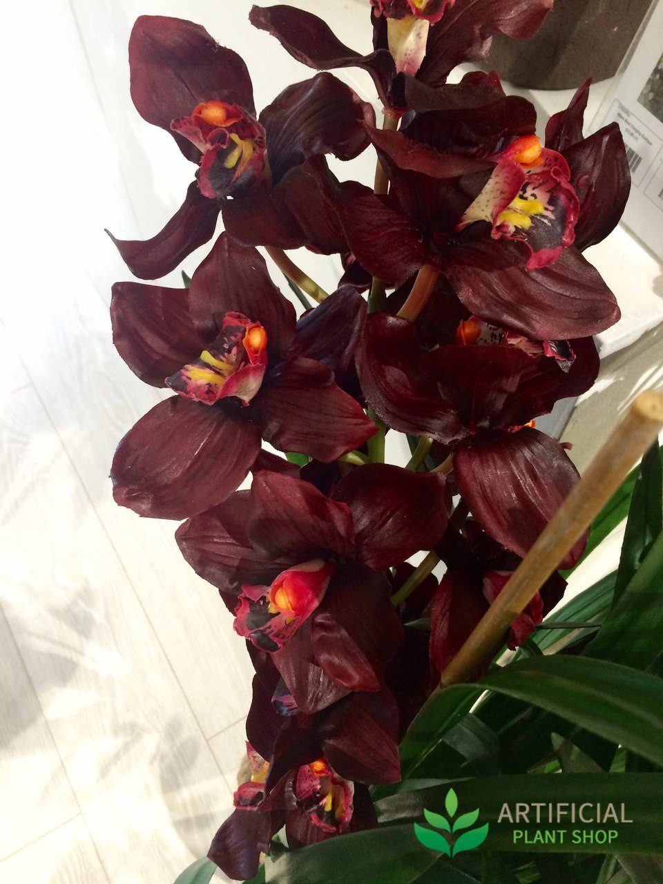 Burgundy Orchid Flowers