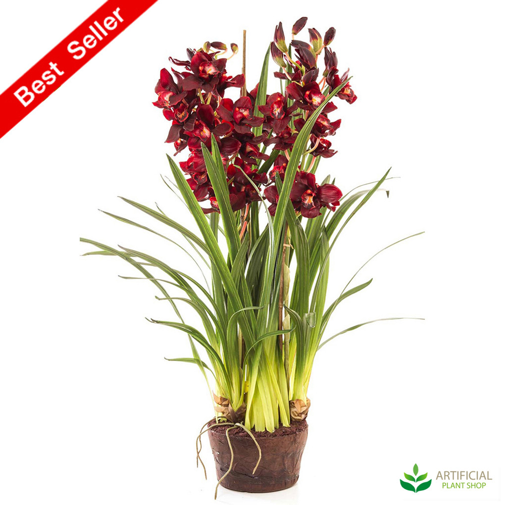 Burgundy Orchid 1.1m with paper p