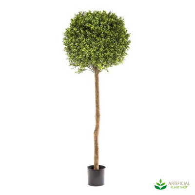 Boxwood Topiary Tree 1.5m