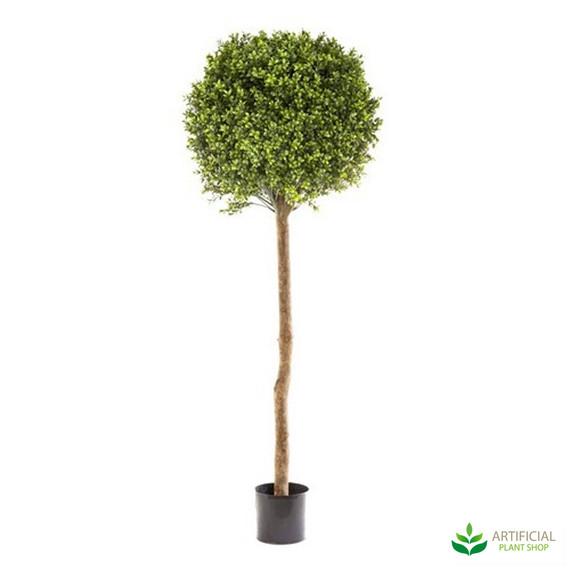 Boxwood Topiary Tree 1.5m