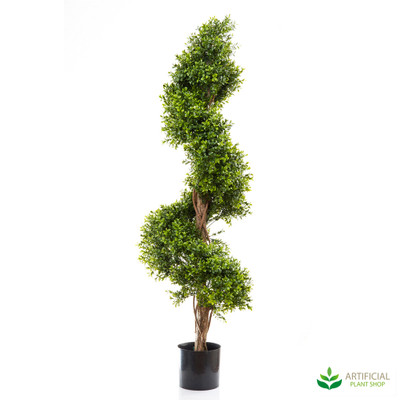 Boxwood Spiral Tree 1.4m