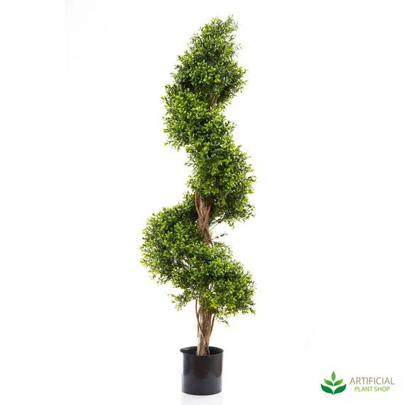 Boxwood Spiral Tree 1.4m