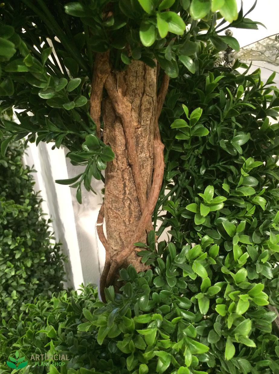 Boxwood spiral tree Trunk